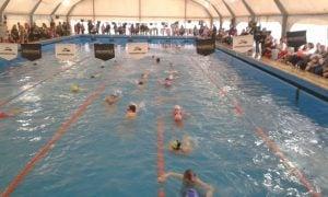 torneo escuelita de natacion